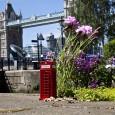 """LAWINE auf Auslandseinsatz – in der Weltmetropole London haben wir nach den kleinen Dingen Ausschau gehalten. """"Pothole Gardening"""" ist eine etwas andere Form des Guerilla..."""